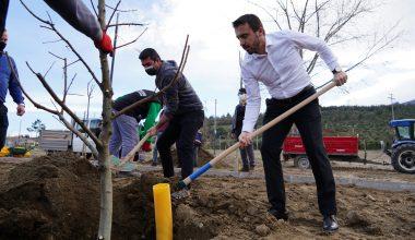 Fidan Kenti Kestel'de Yetişen Meyve Fidanları, Naim Süleymanoğlu Parkı'nda Yükselecek