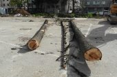 Okul Bahçesindeki Ağaç Katliamını Mahalleli Önledi
