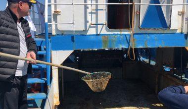 Gemlik Körfezi'nde Plankton Temizliği Başladı