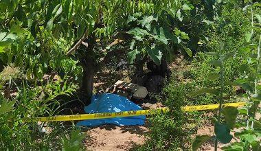 Kestel'de Çapa Motoru ve Ağaç Arasında Sıkışarak Hayatını Kaybetti
